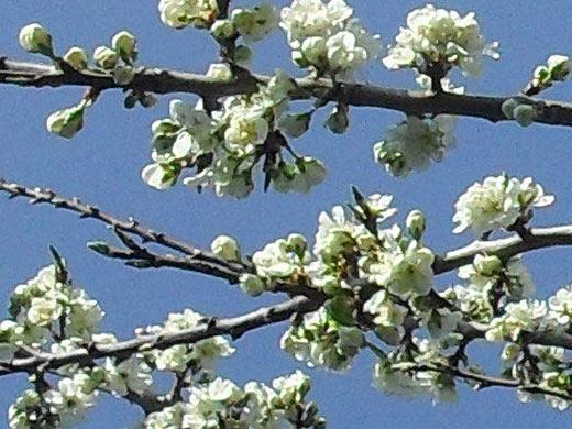 Springtime Awaits
